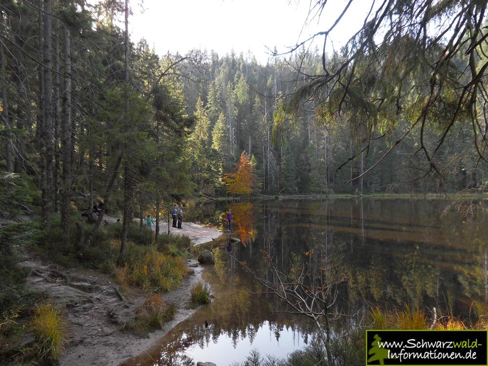 Bannwald wilder see hornisgrinde webcam