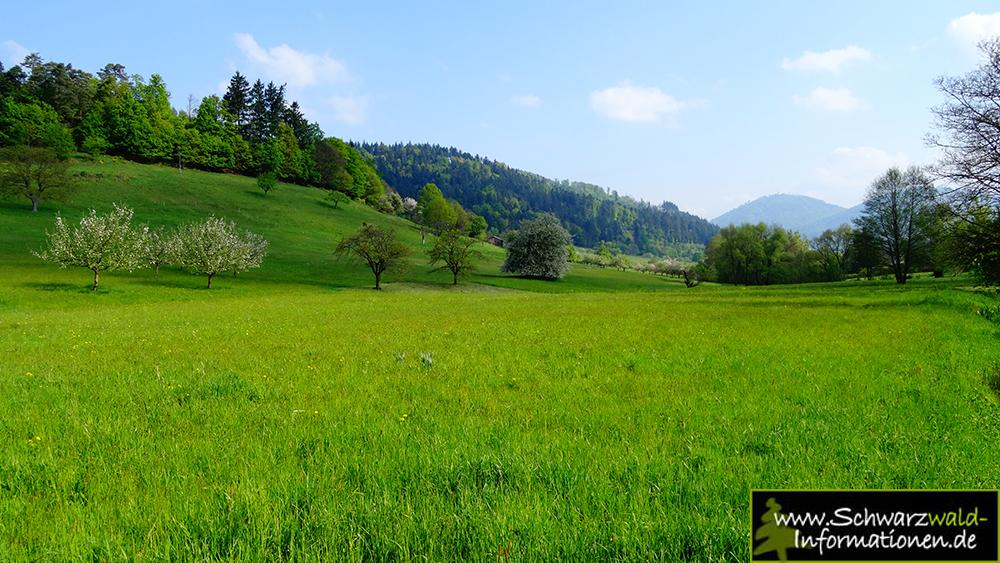Panoramaweg Baden Baden