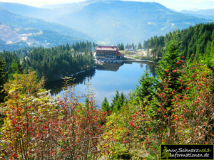 Mummelsee See-Blick