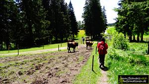 Querweg Schwarzwald-Kaiserstuhl-Rhein